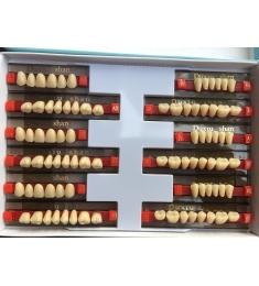 Răng nhựa 02 lớp - bộ 28 răng